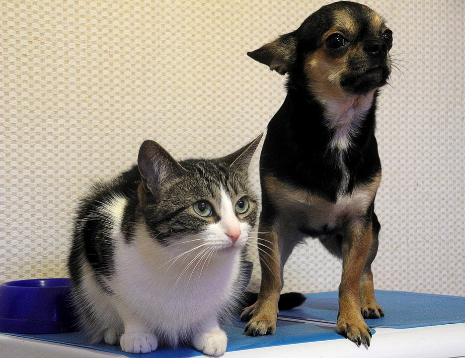cat-and-dog-975023_960_720